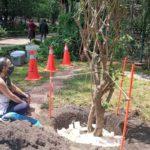 Artista Antonio Gritón a 'sembrar' deseos junto a un árbol en el Parque Hundido